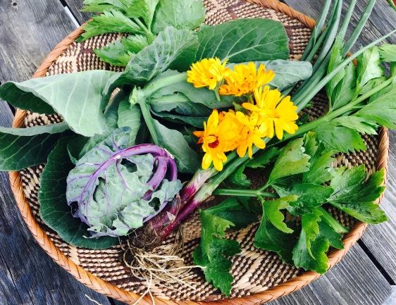 Pesto aus Blattgemüse wie Blätter der roten Beete und Kohlblätter
